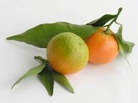 Confiture d'oranges amères 200 g  pot de 200 g
