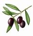 Délices d'olives 90 g Pot de 90 g